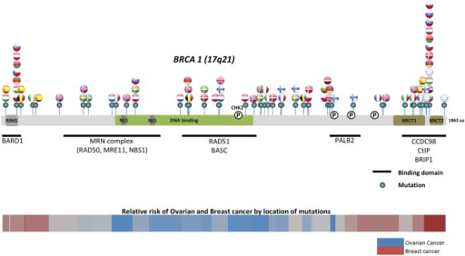 Location of common and founder BRCA1 mutations by country. Schematic of common and founder mutations by country modified from Janavičius (71) and Ramus and Gayther (72). Relative risk data taken from Rebbeck et al. (73).
