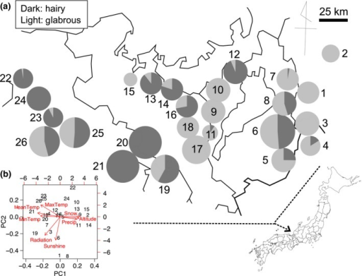 Locality and climatic variation in the present study. (a) Map showing locations of study sites and their frequency of hairy and glabrous plants. The size of pie charts reflects the total number of plants at each site. The site IDs (1–26) correspond to those listed in the Tables S1 and S2. (b) Summary of the principal component analysis (PCA) for eight meteorological variables. Red arrows show contributions of each climatic factor to the first and second principal component, PC1 and PC2
