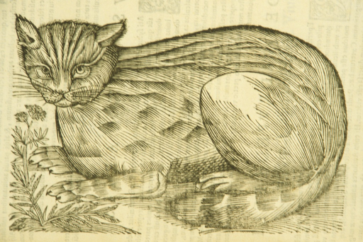 <p>Illustration of a crouching wildcat.</p>