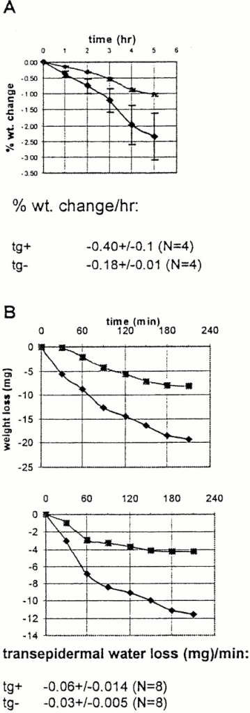 Involucrin-Dsg 3 transgenic mice show increased transepidermal water loss. (A) Neonatal mice were separated from their mothers and weighed over time. Transgenic mice (♦) lose weight faster than nontransgenic littermates (•). Error bars indicate SEM for four mice in each group. Rate of weight loss, mean ± SEM is shown. (B) Weight loss of isolated skin from transepidermal water loss through the epidermis. Graphs show paired comparison of transgenic mouse skin (♦) and nontransgenic littermate skin (▪). Rate of transepidermal water loss, mean ± SEM for eight samples in each group is shown.