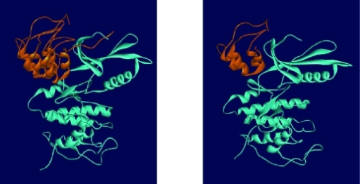 Representation of complex molecules docked by HEX. a) p16 binds to both the N and C-terminal lobes of Cdk4, predominantly the N-terminal lobe. b) truncated structure H interacts with Cdk4 in almost the same manner as the full length molecule.
