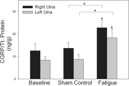 Bone CGRP is increased by mechanical loading.Cyclic fatigue loading of the right ulna resulted in increased CGRP concentrations in both the fatigue-loaded (right) ulna and the contralateral (left) ulna, when compared to the Baseline group. No differences in CGRP concentrations were seen between the Sham group and the Baseline group. The Fatigue group also had increased CGRP concentrations compared to the Sham group. * −p<0.05 versus the relevant baseline control bone. Error bars represent standard error of the mean. Baseline group n = 12; Sham group n = 12; Fatigue group n = 12.