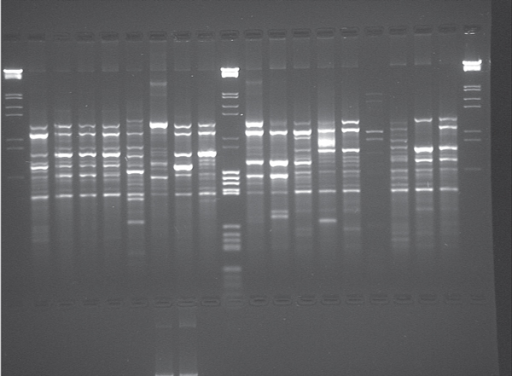 Thermostable DNA polymerases are a mainstay of PCR-based diagnostics.