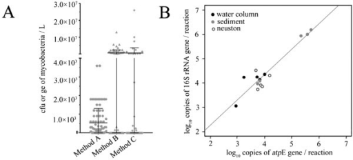 Mycobacteria quantification in environmental samples and comparison to reference methods. A) Quantification in drinking water samples (n = 90) was performed by culture method (Method A: Le Dantec et al. 2002) [28], and the new real-time PCR targeting the atpE gene (locus Rv1305 in M. tuberculosis genome) applied to DNA extracted by commercial spin column procedure (Method B: Qiagen kit extraction), or reference DNA extraction procedure (Method C: Radomski et al. 2011) [29]. B) Quantification in lake samples (n = 15) was performed measured by real-time PCR targeting 16S rRNA (Radomski et al. 2010) [17] or atpE genes.