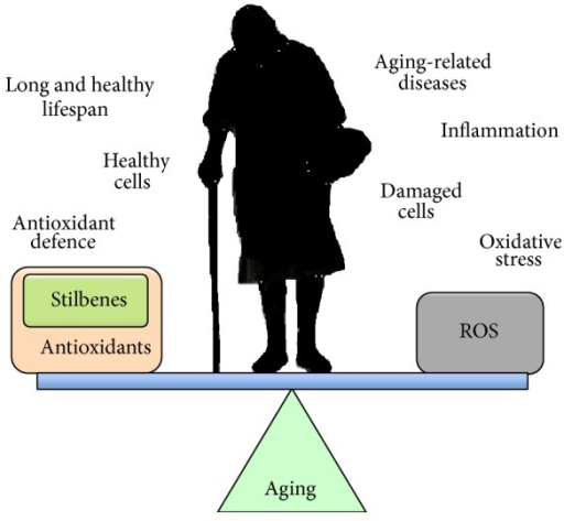 As an individual ages, the balance between a long, healthy lifespan and suffering age-related diseases is believed to be related to the interplay between the cellular antioxidant defence system and adverse effects related to oxidative stress. In aging cells, oxidative stress increases due to a progressive decline in the efficiency of antioxidant defence systems. There is convincing evidence to indicate that supplementation with polyphenols, such as stilbenes, anthocyanins, and catechins, can increase cellular antioxidant defence and promote health of the individual.