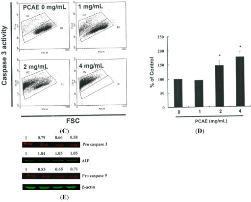 (A) Reduction of mitochondrial membrane potential (MMP) in Ishikawa cells by PCAE, as determined by JC-1 staining and detected by flow cytometry: MMP was shown to be significantly reduced in Ishikawa cells treated with PCAE (0, 1, 2, and 5 mg/mL); (B) Quantification by flow cytometry; (C) Caspase-3 activity in Ishikawa cells following treatment with PCAE for 24 h. Following treatment, the cells were harvested and labeled using FITC rabbit anti-active caspase-3; (D) Activation was quantified by flow cytometry; and (E) Cells were treated with PCAE for 24 h and procaspase-3, and -9, as well as AIF proteins were subsequently detected by Western blot analysis. All data are reported as the mean (±SEM) of at least three separate experiments. The * symbol in each group of bars indicates significant differences between PCAE treatment and control groups (p < 0.05).