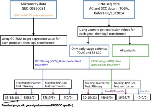 Study schema.A graphical illustration showed how Cox-TGDR-specific and Cox-filter were applied to select relevant subtype-specific prognostic genes for AC and SCC lung cancer.