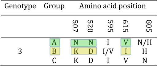 Hypervariable region of the TeHV3 gB protein.Three unambiguous amino acid changes differentiate the A and B genogroups within TeHV3 (colored blocks). The putative genogroup C shows an intermediate sequence between genogroup A and B.
