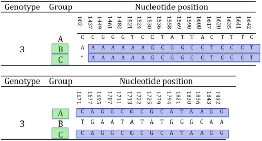 Glycoprotein B homologous recombination.The putative C genogroup shows full identity with either genogroup A or B partial gB nt sequence according to the portion of the hypervariable region considered. This arrangement is consistent with the outcome of homologous recombination. The highlighted sequence blocks show the homologous regions between the gB sequences of B and C and A and B genogroups, respectively (* = not available nucleotide for the putative group C TeHV strain).