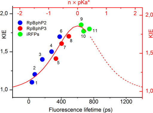 KIEs of iRFPs, RpBphP2 and RpBphP3 versus their fluorescence lifetimes.Dots represent current experimental results and from refs 26 and 28. The red curve is calculated according to Marcus BEBO expression model. The constant n before pKa* is a random positive scale factor. Number 1 to 11 represent life time from protein (1) WT PAS-GAF-PHY (short phase), (2) WT PAS-GAF (short phase), (3) WT PAS-GAF-PHY, (4) WT PAS-GAF, (5) WT PAS-GAF-PHY, (6) WT PAS-GAF-PHY/D202A, (7) WT PAS-GAF, (8) WT PAS-GAF-PHY/D216A, (9) iRFP720, (10) iRFP713 and (11) iRFP702.