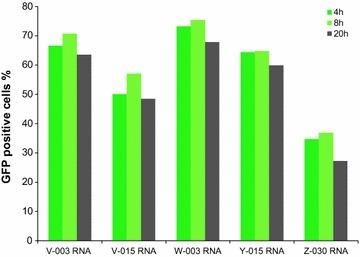 Time kinetic of B cell nucleofection with IVT mRNA. The percentage of GFP positive B cells 4, 8 and 20 h post nucleofection with IVT mRNA using the five most potent nucleofection programs are represented