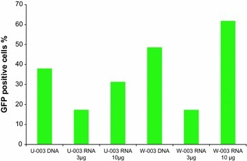 Influence of IVT mRNA quantity on B cell nucleofection. The percentage of GFP positive B cells nucleofected with either 1 µg plasmid DNA, 3 or 10 µg IVT mRNA are depicted for one cancer patient comparing two programs