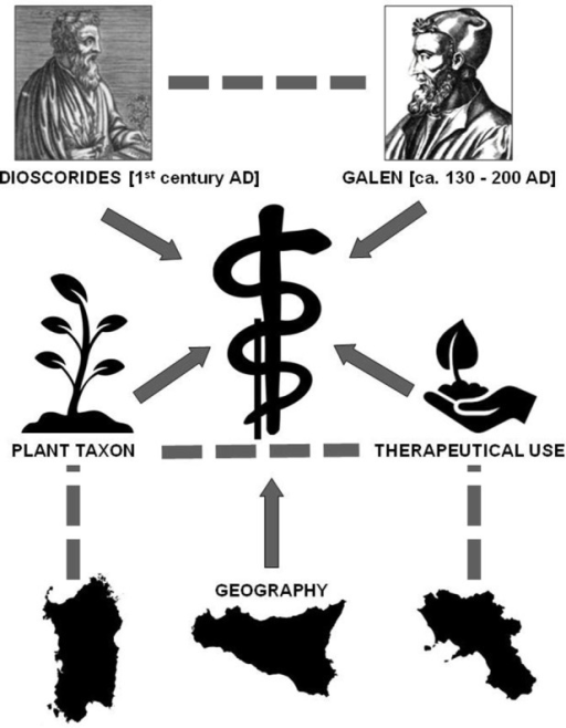 "Causal model assuming that Dioscorides and Galen influenced contemporary medicinal plant use considering the confounding variables ""plant taxon,"" ""geography,"" ""therapeutical use"" and their interactions (segments). Arrows indicate the direction of the influence, which may exert a causal effect."