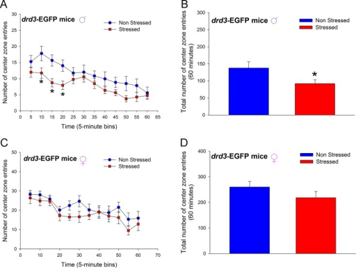 Effect of repeated restraint stress and social isolation during preadolescence on number of center zone entries in an open field arena by adult drd3-EGFP mice.Adult male (A and B) and female (C and D) drd3-EGFP mice were either not stressed (blue, n = 11) or subjected to repeated restraint stress and social isolation during preadolescence (red, n = 11). Number of center zone entries were measured in an Open Field test in adulthood. Significant reduction in number of entries was observed in stressed male drd3-EGFP mice during the initial 20 minute period following the placement of the mice in the arena (*, p<0.05, two-way repeated measure ANOVA, post-hoc SNK test; A). The total number of center zone entries over the entire 60 minute observation period was also significantly reduced in stressed male drd3-EGFP mice (*, p<0.05, Student's t-test). The stress-induced changes in locomotor activity was absent in adult female drd3-EGFP mice subjected to preadolescent stress and social isolation (C and D). Error bars represents ± SEM.