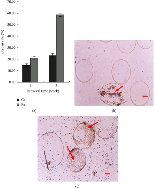 Biocompatibility of microcapsules. The same number of empty DPC-Ba and DPC-Ca microcapsules was introduced into the peritoneal cavity of mice and retrieved after 1 and 3 weeks for measurement of rate of fibrosis (a). One week after transplantation into the mouse peritoneal cavity, the retrieved Ca (b) and Ba (c) microcapsules showed increased fibrosis (2.3% and 5.9% (P < 0.01), resp.), with surrounding inflammatory cells. (Bar = 100 μm.)