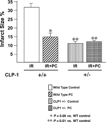 CLP‐1 +/− mice hearts exhibit a decreased infarct size. Infarct size was measured as described in Materials and Methods. Infarct size is significantly reduced in CLP‐1 +/− heart mice during ischemia/reperfusion without preconditioning. Results are shown as mean ± S.E.M. of six mice per group. *P < 0.05 versus control, **P < 0.01 versus control.