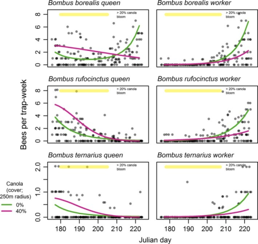 Within‐season changes in bumble bee abundance in relation to canola crops for three selected species using separate generalized linear‐mixed models for queens and workers. Interaction plots demonstrate a statistically significant interaction effect. 0% and 40% curves show the predicted interaction with canola cover at the average values for canola‐absent and canola‐present sites, respectively. Points indicate trapping rates at 184 trapping events and are shown as jittered semitransparent circles to reduce overplotting