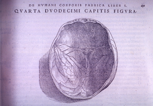 <p>Inferior view of the top of the skull with venous channels.</p>