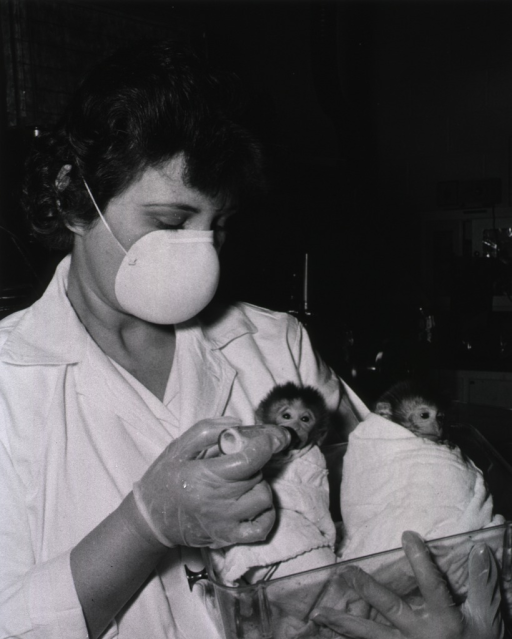 <p>Showing baby monkeys being bottle-fed.</p>