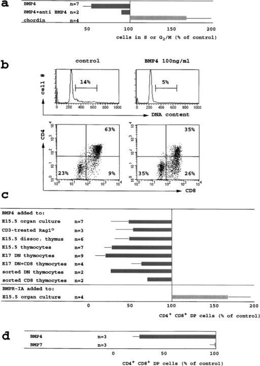 BMP4 inhibits the cell cycle activity and the developmental progression of DN thymocytes to the DP stage. (a) E15.5 thymic lobes were cultured in hanging drops for 24–36 h with BMP4 (100 ng/ml, 6 nM approximately), BMP4 (100 ng/ml) plus neutralizing anti-BMP4 (10 μg/ml) or chordin (2 μg/ml, 20 nM approximately). Thymocytes were stained for CD4 and CD8, fixed, permeabilized, and DNA content was visualized by 7AAD. The fraction of cells with a DNA content >G1 is shown relative to control cultures (16 ± 7% >G1). (b) Reduced cell cycle activity and impaired developmental progression in BMP4-treated E15.5 thymic organ cultures (36 h, methods as in a). (c) BMP4 (100 ng/ml) inhibited the DN to DP transition in E15.5 thymic organ cultures by 52 ± 21% (from 50 ± 10% DP to 25 ± 13% at 36 h, top row) and in Rag1o/o thymic organ cultures treated for 72 h with anti-CD3ε (1 μg/ml) by 46 ± 22% (from 57 ± 4% DP to 32 ± 12%, row two). BMP4 reduced the generation of DP cells in proteolytically dissociated E15.5 thymus suspensions by 52 ± 17% (from 59 ± 13% DP to 28 ± 9%, third row), in mechanically prepared E15.5 thymocyte suspensions by 72 ± 8% (from 44 ± 19% DP to 13 ± 6%, row four), in DN cells prepared by CD8 depletion of E17 thymocytes by 80 ± 13% (from 33 ± 16% to 8 ± 8%, row five), in DN/CD8 transitional thymocytes prepared by CD4 depletion of E17 thymocytes by 36 ± 10% (from 66 ± 23% DP to 44 ± 20%, row six), in highly purified DN by 72% (from 39% DP to 11%) and 73% (from 40% DP to 10%) in two experiments (row seven), and in highly purified CD8 transitional thymocytes by 26% (from 91% DP to 67%) and 29%, (from 83% DP to 59%) in two experiments (row eight, all suspension culture experiments read out at 18 h). Recombinant BMPR-IA/Fc (bottom row, 1–3 μg/ml) increased the generation of DP cells in E15.5 thymic lobes cultured for 18 h by 67 ± 28% (from 23 to 38%, n = 4). (d) E15.5 thymus suspensions were cultured with 300 ng/ml of BMP4 or BMP7 and analyzed as in Fig. 3, b and c. BMP4 reduced the generation of DP cells by 73 ± 7% (from 50 ± 27% DP to 14 ± 9%) but BMP7 did not (1 ± 5%).