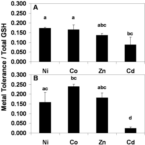 Bar graph showing the slopes of trend lines obtained through plotting metal tolerance to Ni, Co, Zn and Cd for each line against shoot GSH accumulation. Metal tolerance was scored as the percentage of seedlings with normal upright cotyledons (A) or the formation of a root hook (B). Data represent means of slopes (n = 3 for each metal ± SD). Lower case letters (a, b, c and d) represent significantly different means, using the Tukey-Kramer test comparing all pairs (P < 0.05). Fits of the metal tolerance verses GSH plots for Ni, Co, Zn and Cd in shoots, R2 = 0.99, 0.96, 0.98, and 0.99, respectively, and for roots R2 = 1.0, 1.0, 0.98 and 1.0.