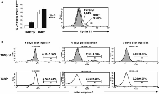 Proliferation and apoptosis in DN4 population after HC treatment. (A) The left panel is the percentages of icTCRβ–/γδ– and icTCRβ+ DN4 cells positive for high level of intracellular expression of cyclin B1, indicative of cells at the S/G2/M cell cycle stages. Bars represent the mean of five mice analysed 3 days (open bars) and 4 days (black bars) after HC treatment. The right panel is representative histogram overlay of intracellular cyclin B1 staining of icTCRβ–/γδ– (full histogram) and icTCRβ+ (empty histogram) DN4 cells 4 days after HC treatment. (B) Intracellular expression of the active form of caspase-3 in DN4 thymocytes after HC treatment. Histograms show caspase-3 expression in TCRβ–/γδ– (shaded histograms) and TCRβ+ (open histograms) DN4 thymocytes after 4 days (left), 6 days (middle) and 7 days (right). Percentages of active caspase-3-positive cells are shown.