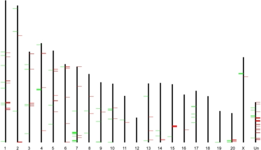 "Chromosomal distribution of GK/Wistar CNVRs.Green bars on the left and red bars on the right of chromosomal axes represent CNV ""loss"" and ""gain"", respectively. Chromosome ""Un"" represents the pseudo-chromosome consisting of contigs that can not be confidently mapped to a specific chromosome."