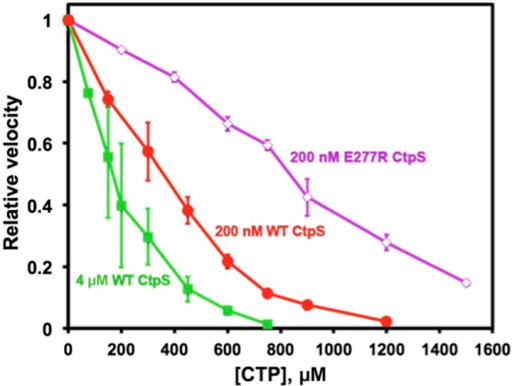 Polymerization enhances the inhibition of CtpS activity by CTP.At a CtpS concentration below the threshold concentration, (200 nM, red circles), the CTP IC50 value is 330 μM. At concentrations that favor polymerization (4 μM CtpS, green squares), CTP binds with higher apparent affinity with an IC50 of 170 μM. Abolishing polymerization with E277R mutation reduced apparent CTP activity inhibtion (IC50 = 833 μM at 200 nM CtpSE277R) (purple open diamonds). The CTP synthesis vo values before normalization were 1.24, 18.5, and 0.82 μM/s for 200 nM CtpS, 4 μM CtpS, and 200 nM CtpSE277R, respectively.DOI:http://dx.doi.org/10.7554/eLife.03638.026