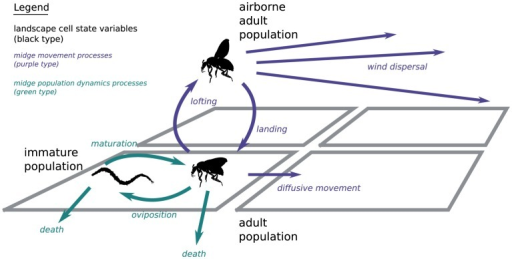 Schematic overview of the simulation model components.The dynamic state variables (population densities) are shown in black type. The processes midge movement modelling midge movement are shown in purple; processes modelling midge population dynamics are shown in green.