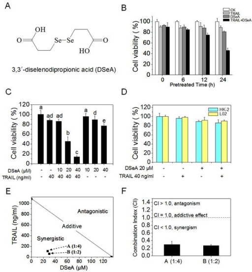 DSeA and TRAIL synergistically inhibit growth of A375 cellsCell viability was determined by MTT assay as described in Methods. (A) The chemical structure of DSeA. (B) DSeA enhances the efficacy of TRAIL-induced A375 cells growth inhibition. Cells were pretreated with or without 20 μM DSeA for 0, 6, 12 or 24 h and then incubated in the presence or absence of 40 ng/ml TRAIL for another 24 h. (C) Cells were pretreated with or without indicated concentrations of DSeA for 24 h and then co-treated with 40 ng/ml TRAIL for 24 h. (D) Cytotoxic effects of co-treatment on human normal cell lines HK-2 and L02. Cells were pretreated with 20 μM DSeA for 24 h and then expose to 40 ng/ml TRAIL for another 24 h. (E) Isobologram analysis of the synergistic antiproliferative effect of co-treatment on A375 cell. The data points (A, B) in the isobologram correspond to the actual IC50 value of DSeA and TRAIL with different ratio of concentrations in the combined treatment. DSeA (μM): TRAIL (ng/ml) = 1:4, 1:2. (F) The CI corresponding to different ratio of concentrations in the combined treatment. Each value represents the mean ± SD of three independent experiments. Bars with different characters (a, b, c, d and e) are statistically different at p < 0.05 level.