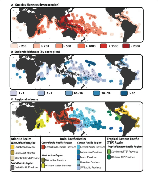 "Species richness, endemism and provinciality of tropical reef fishes. (A) Map of species biodiversity by tropical ecoregion (Spalding et al., 2007) with color gradient denoting areas of high species richness (dark red) to areas of low species richness (light red). (B) Map of endemic species by ecoregion. Under this scheme a species is endemic if it is only found in a single ecoregion, i.e., a regional assessment of endemism rather that designated by percent of area comparison (Hughes et al., 2002). Species richness and endemic estimates are based on species counts from the ""checklist"" × ""all species"" dataset of Kulbicki et al. (2013). (C) Biogeographic delineation of tropical Realms, Regions, and Provinces based on species dissimilarity analysis of Kulbicki et al. (2013). This biogeographic scheme is base on checklists as base units (see Kulbicki et al., 2013), however here the scheme is imposed onto the tropical ecoregions of Spalding et al. (2007)."