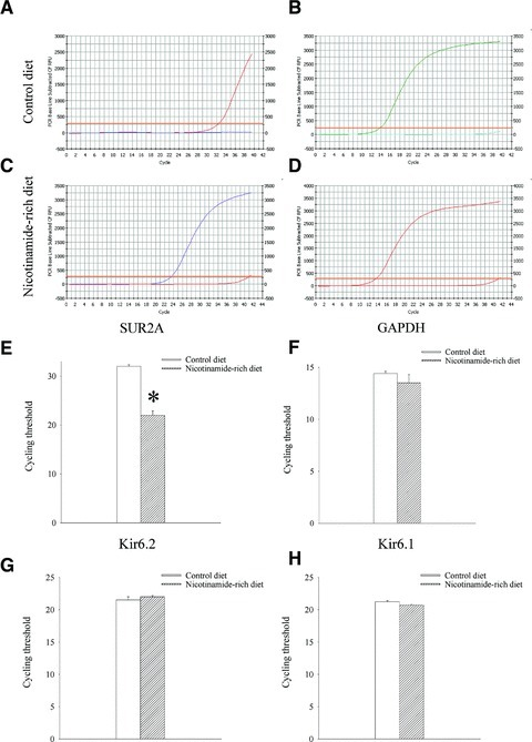 Expression of KATP channel subunits in hearts of mice on control and nicotinamide-rich diet. Representative progress curves for the real-time PCR amplification of SUR2A (A and C) and GAPDH (B and D) cDNA from mice on control or nicotinamide-rich diet (as labelled in the figure) and a corresponding bar graphs (E and F) as well as bar graphs depicting cycle threshold values for Kir6.2 and Kir6.1. Each bar represents mean ± S.E. of the mean (n = 4–6). *P < 0.05.