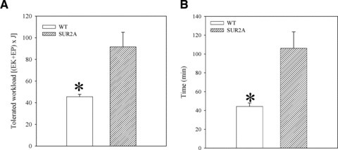 Physical endurance in wild-type (WT) and SUR2A mice on control diet. Bar graphs showing energy expenditure (A) and time spent (B) on treadmill of WT and SUR2A mice. Each bar represents mean ± S.E. of the mean (n = 6). *P < 0.05.