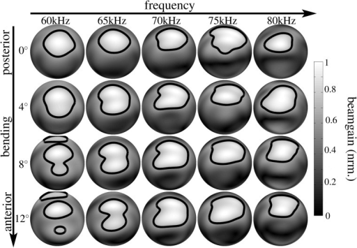 Numerical beampattern estimates obtained for the lancet rotation in the noseleaf model derived from specimen male 2.Each row represents a different orientation of the lancet from complete extension (posterior, 0°, top row) to the maximum flexion studied (anterior, 12°, bottom row). The columns correspond to different frequencies (60 kHz to 80 kHz). The level for the single contour line shown is -3 dB. The gray-level coding of the amplitude values is linear.