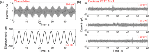 (a) The current response of the lipid bilayer (free of MscL channels) as droplets are oscillated at 0.2 Hz and 150 μm peak-to-peak amplitude. The current response is sinusoidal which corresponds to the change in the bilayer capacitance correlated with a change in the lipid bilayer area resulting from the sinusoidal oscillations of the droplets. (b) The current response of the lipid bilayer containing V23T-MscL channels when high transmembrane potentials are applied without mechanically stimulating the droplets.