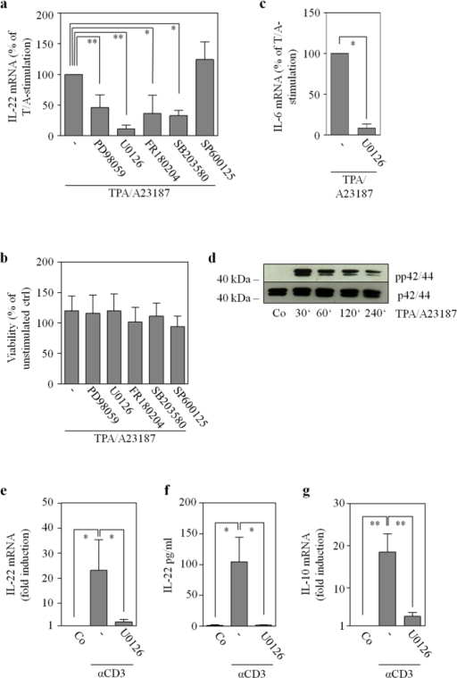 MAP kinase signaling is essential to IL-22 mRNA induction.(a–c) Where indicated, Jurkat T cells were pretreated with MAP kinase inhibitors for 1 h prior to stimulation with TPA (100 ng/ml)/A23187 (10 μM) for 4 h. PD98059 (n = 7), 50 μM; U0126 (n = 3), 10 μM, FR180204 (n = 11), 10 μM; SP600125 (n = 3), 10 μM; SB203580 (n = 5), 10 μM. In addition, cell were kept as unstimulated control. All cultures were adjusted to a final concentration of 0.21% DMSO (vehicle for TPA/A23187 plus inhibitor). (a,c) IL-22 and IL-6 mRNA were determined by realtime PCR. Target mRNA was normalized to GAPDH. Data are depicted as % of TPA/A23187-stimulation (means ± SD; *p < 0.05, **p < 0.01). Fold-induction of mRNA by TPA/A23187 (compared to unstimulated control): 121.12 for IL-22 (n = 16; p < 0.001), 19.3 for IL-6 (n = 3; p < 0.001). Statistical analysis on raw data, one-way analysis of variance with post-hoc Bonferroni-correction. (b) Viability is shown as % of untreated control (means ± SD). (d) Jurkat T cells were kept as unstimulated control or stimulated with TPA (100 ng/ml)/A23187 (10 μM). All cultures were adjusted to a final concentration of 0.11% DMSO (vehicle for TPA/A23187). After indicated time points, ERK (p42/44) activation, as detected by p42/44 phosphorylation, was determined by immunoblot analysis. One representative of three independently performed experiments is shown. (e–g) Primary human T cells were kept as unstimulated control (Co) or stimulated with αCD3 (20 μg/ml) for 24 h. Where indicated, cells were pretreated with U0126 (10 μM) for 1 h. All cultures were adjusted to a final concentration of 0.1% DMSO (vehicle for U0126). (e,g) IL-22 (e, n = 6) or IL-10 (g, n = 5) mRNA, determined by realtime PCR, was normalized to that of GAPDH (means ± SEM versus unstimulated control; *p < 0.05, **p < 0.01). Statistical analysis on raw data, one-way analysis of variance with post-hoc Bonferroni-correction. (f) IL-22 secretion was determined by ELISA. Data are shown as means ± SEM (n = 4; *p < 0.05). Statistical analysis, one-way analysis of variance with post-hoc Bonferroni-correction.