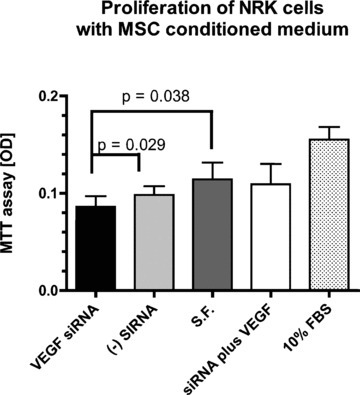In vitro study to determine the effect of VEGF knockdown on proliferation of MSC‐conditioned medium (MSC CM) on NRK cells using the MTT assay. Data are shown as mean + S.D. (n= 6 per group). S.F. = serum free medium. (−) siRNA = negative control (irrelevant) siRNA. MSC CM after knockdown of VEGF significantly reduced proliferation of NRK cells compared to negative control siRNA (P= 0.029), and control MSC CM (P= 0.038). Addition of 10 ng/ml VEGF (S.F. + VEGF) brought proliferation back to baseline. 10% FBS as positive control showed the highest proliferative activity.