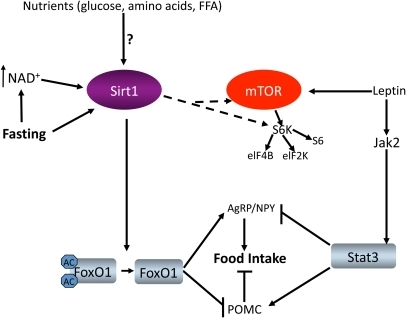 Overview of insulin signaling pathways