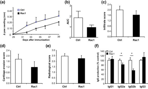 Effect of Rac1 carboxy-terminal peptide treatment of mice with chronic arthritis. (a) Delta hind paw ankle joint swelling of mice that started treatment at day 29 with 4 mg of Ctrl or Rac1 peptide (three times weekly). Values are representative of two independent experiments (n = 16 per group). (b) Area under the curve (AUC) calculated as in Figure 2b. Paraffin-embedded sections of the hind paws were stained with hematoxylin and eosin and analyzed for (c) synovial inflammation and (d) cartilage destruction. (e) X-rays were analyzed for bone damage (n = 16 per group). (f) Sera from mice that started treatment at day 29 (n = 7) with Ctrl (white bars) or Rac1 (black bars) peptide were collected, and the levels of specific anti-collagen IgG were detected. IgG levels in the sera of Ctrl-treated mice were set to 100%, and the levels obtained in the sera of Rac1 peptide-treated mice were then calculated relative to Ctrl. Represented values were calculated within linear regions of the serum dilution curve. All values are expressed as mean ± standard error of the mean. *P ≤ 0.05. Ctrl, control.