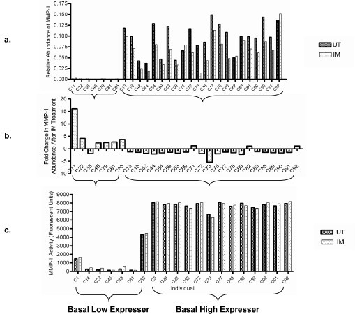 Differential expression of MMP1 in un-treated and inflammatory mediator-treated HUVECs isolated from 29 separate individuals. (a) Quantitative RT-PCR measuring MMP1 abundance in un-treated (UT) and inflammatory mediator-treated (IM) conditions identified two distinct populations; HUVECs isolated from seven individuals had low MMP1 mRNA abundance regardless of UT or IM culture conditions (labelled as Basal Low Expressers), while HUVECs isolated from the other 22 individuals had relatively higher MMP1 mRNA abundance regardless of UT or IM culture conditions (labelled as Basal High Expressers) (P < 0.0001, Mann Whitney non parametric test). (b) To illustrate the regulation of MMP1 mRNA abundance by inflammatory mediator-treatment, the fold change in MMP1 abundance in IM -vs- UT conditions is shown. In six out of the seven Basal Low Expressers MMP1 abundance was increased in response to IM treatment. In contrast, in 19 out of the 22 Basal High Expressers MMP1 abundance either did not change significantly or fell slightly in response to IM treatment. Both the difference in mRNA abundance between the untreated and the inflammatory mediator treated conditions and the differential response between the high and low basal expressers to inflammatory mediator treatment showed statistical significance (Paired t-test, P < 0.0001 and Mann Whitney nonparametric test, P = 0.002 respectively). (c) Total MMP1 enzymatic activity was measured in a subset of the HUVEC isolates. In general low basal expressers have lower enzyme activity than high basal expressers.