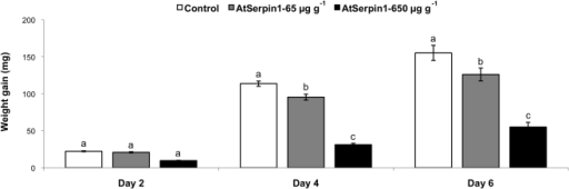 Weight gain of Spodoptera littoralis larvae fed on a diet containing 65 or 650 µg g−1 AtSerpin1 or control diet without inhibitor.Feeding assays were performed for 6 days with third-instar larvae. Bars represent mean ± SE. Bars with different letters on the same day are significantly different (P<0.05; one-way ANOVA followed by Student-Newman-Keuls) (N = 48).