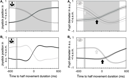 Joystick and pupil responses obtained during binocular rivalry and between stimuli of differing luminances. (A) Joystick position and pupil responses to subjective changes in perceived grating orientation relative to joystick responses. Time zero is defined as half of the movement duration (not the mid position of the joystick which occurs earlier). This midpoint corresponds rather well with the time of button presses. (A1) Joystick position. The transition between the two percepts requires on average 928 ms in both directions (shaded area), and joystick responses start about 460 ms (left side of shaded area) before the joystick reaches its midpoint, mirroring the relative slowness of the perceptual transition. (A2) Pupil constrictions (which are known to be faster than dilations, Miller et al., 2005) start at about the same time as joystick responses [see (A1)]. Hence the apparent lead of pupil responses over behavioral responses disappears if a continuous measure is taken rather than a discontinuous one (button presses). (B) Joystick and pupil responses to physical changes of stimuli. (B1) Joystick responses relative to physical stimulus changes which took place within the shaded area. Latencies when expressed as midpoints of the joystick movement are very similar to those for button presses. Joystick movements are much faster here than for rivalrous transitions, reflecting the fact that the transition here is instantaneous (external) rather than gradual (internal; rivalrous). (B2) Pupil constrictions caused by physical stimulus transitions start at the same time as joystick movements [see also (B1)].