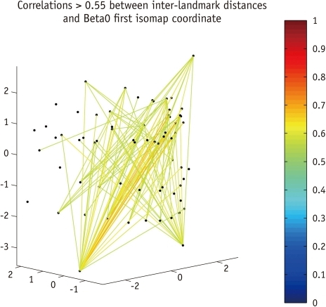 Correlations > 0.55 between inter-landmark distances and first β0 coordinate, colour-coded by strength. This coordinate is most associated with overall size, particularly vertically (and diagonally).