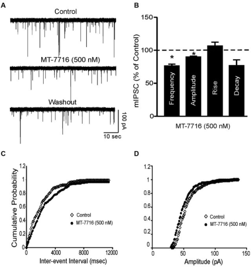 MT-7716 decreased spontaneous miniature inhibitory postsynaptic currents (mIPSCs) in CeA. (A) Representative CeA mIPSCs before, during the superfusion of 500 nM MT-7716 and washout. (B) Mean ± SEM frequency, amplitude, rise and decay of mIPSCs for CeA neurons from control rats. MT-7716 significantly (* p < 0.001) decreased the mean mIPSC frequencies and amplitude. Statistical significance * was set at p < 0.05 and calculated by Student's t-test. (C) Cumulative fractions calculated by Kolmogorov-Smirnov sample test show that MT-7716 shifted the cumulative frequency to the right (in 11 out of 12 CeA neurons studied), indicating a longer inter-event interval during its application, suggesting decreased GABA release. (D) Cumulative fractions calculated by Kolmogorov-Smirnov sample test show that MT-7716 shifted the cumulative frequency to the right (in 10 out of 12 CeA neurons studied). MT-7716 shifted the cumulative amplitude to the left, indicating smaller mIPSC amplitudes, suggesting postsynaptic site of action.