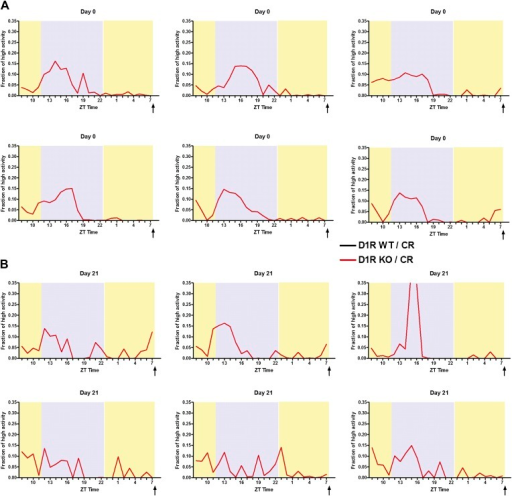 Individual mouse normalized high activity data from n = 6, D1R KO mice on day 0 and day 21 of 60% CR diet.DOI:http://dx.doi.org/10.7554/eLife.03781.007