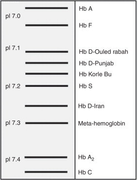 Schematic representation of relative mobilities of different hemoglobins using the isoelectric focusing method. Hb D-Punjab is shown in the figure with isoelectric point (pI) between 7.1 and 7.2.