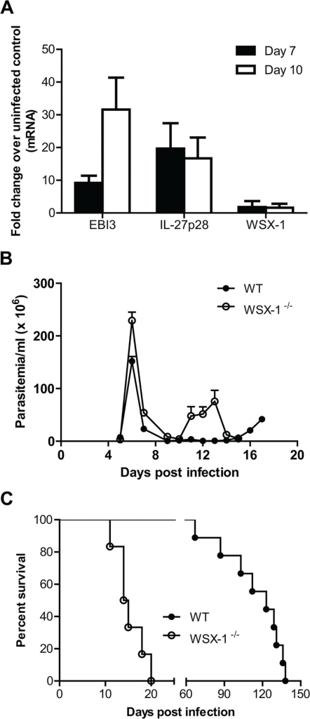 Enhanced expression of IL-27 and its crucial role in survival of mice infected with T. congolense.(A) mRNA expression levels of IL-27p28, EBI3 and WSX-1 in the liver of wild-type mice infected with T. congolense on day 7 and 10 versus day 0 (uninfected). (B) Parasitemia of IL-27R-/- (WSX-1-/-) and wild-type mice (n = 6–9) infected with T. congolense. (C) Survival of IL-27R-/- and wild-type mice (n = 6–9) infected with T. congolense. Data are presented as the mean ± SEM. The results presented are representative of 3 separate experiments.