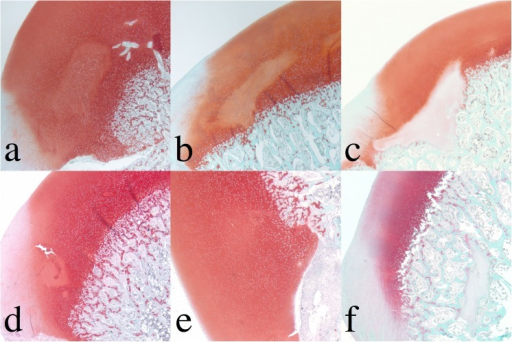 Safranin O-stained sections of femoral condyle.Top row: Surgically induced large lesions (3, 5, and 9 weeks post induction). Bottom row: Surgically induced small lesions (4, 6 and 10 weeks post surgical induction). Decreased staining in the chondronecrosis shows a variable degree of pallor. The optical density experiment of the safranin O-stained sections of the femoral condyle was conducted and shown in Fig 2 to estimate the PG loss in the chondronecrosis.