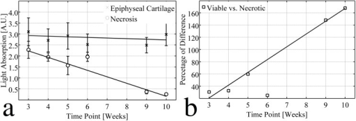Linear regression analysis of the optical density experiment.(A) Light absorptions (A.U.) for viable (x, R2 = 0.129) and necrotic (o, R2 = 0.989) epiphyseal cartilage were fitted linearly to different time points, indicating that the PG content remained stable in the viable epiphyseal cartilage, but decreased linearly with time in the areas of chondronecrosis. (B) The % difference between light absorption by viable and necrotic epiphyseal cartilage was fitted linearly to different time points (R2 = 0.993). Although slight PG loss was observed in the 6-week sample, this point was excluded from the analysis because no histologically evident chondronecrosis was observed.