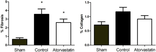 Fibrosis and Collagen Levels in Remote Regions of the LV after MI.Histogram shows that treatment with atorvastatin (white) did not reduce the deposition of fibrosis or collagen compared to the control group (black). Fibrosis content was reduced in animals from the sham group (gray) compared to animals subjected to MI (atorvastatin and control groups). Data are expressed as the mean ± SD. *P<0.05 versus sham group. Data are representative of 14 animals per group.